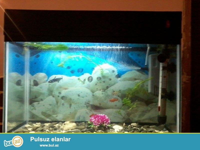 salam akvarium satiram 45 manata uzunlugu 46 eni 21...