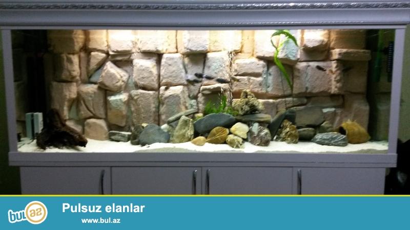akvarium satilir 170* 45* 65.