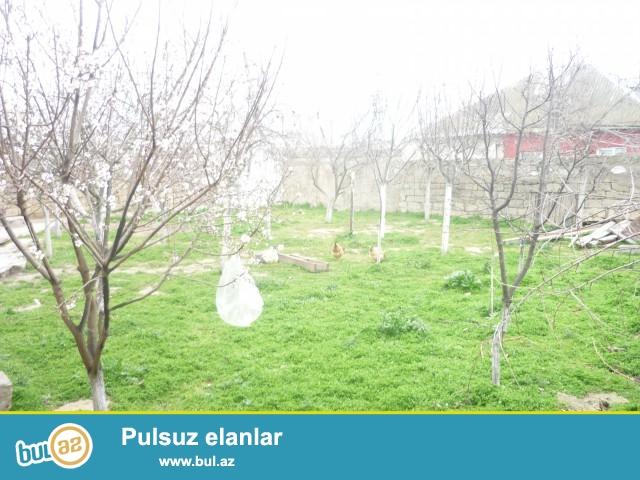 FAİQ Sabunçu Rayonu Zabrat 2 qəsəbəsində seyid...