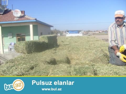 """""""ÜÇ QARDAŞLAR"""" kəndli fermer təsərrüfatı..."""