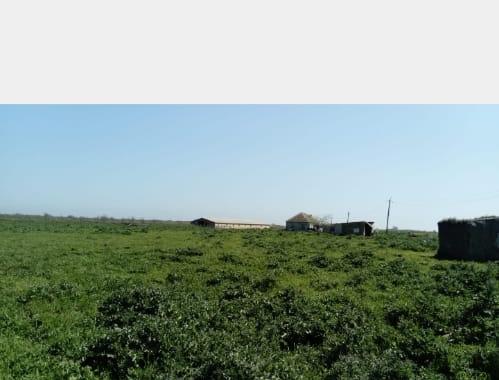 Ferma satılır.Xaçmazda yerləşir.1 hektar 78 sotun içində 200 baş iri,800 baş xırda heyvan üçün tövləsi var.Evi var 10 nun 10 na.İşığı var.Otlaq sahəsi var,çayın kənarında yerləşir.Sənədi var.Yolu asvaldı.Ferma yeni tikilib.