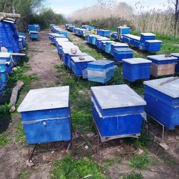 Arı ailələri satılır.Ana arılar hamısı 2020-ci ilindi. Boz