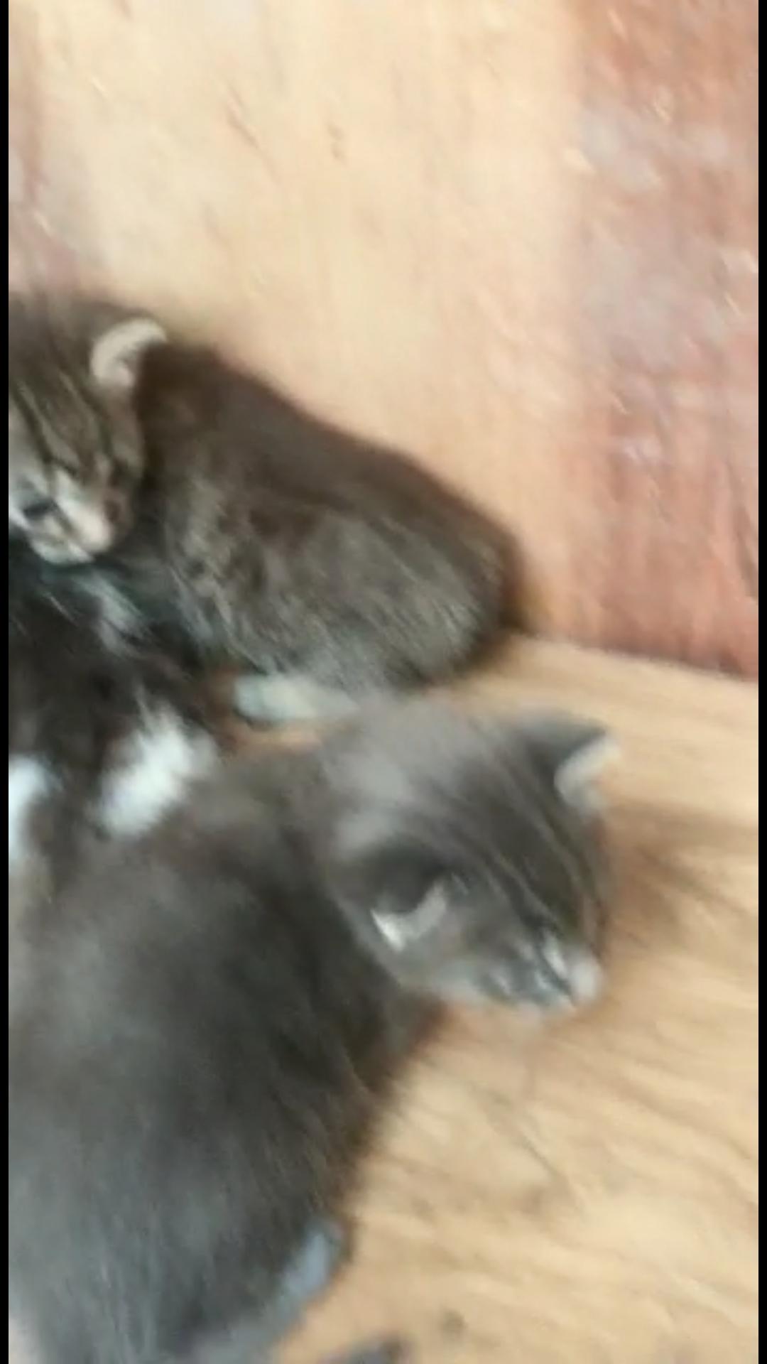 Котята в добрые руки,родились