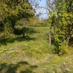 BAĞ TORPAQ Satılır 2 hektar OGUZ rayonu Padar kəndı Təzə