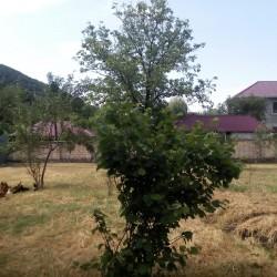 Qebele Rayonu Vendam Kendi Duyma istrahet Merkezne 1'5 km
