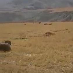 220 hektar Ərazi satılır Dəvəçi-Xacmaz yolu,Şabran r.