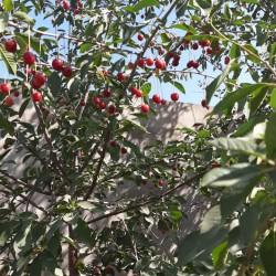 18 sot torpaq satılır Maştağa-Buzovna yolu Parkın arxasında