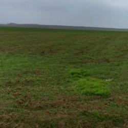 Ərazi satılır 100 hektar Şabran rayonu ərazisi,pay