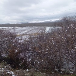 9 hektar Nar bağı satılır Göyçay-İsmayıllı Ərazisində 400