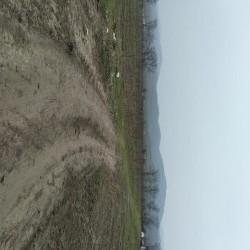 Gilas bağı satılır 2 hektarda, xüsusi mülkiyyət Kənd