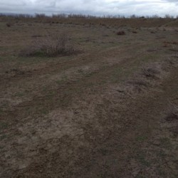3.4 hektar xüsusi mülkiyyət yer satılır. İsmayıllı rayonu