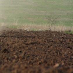 Xızıda Altıağac yolunda meşənin qoynunda torpaq var.