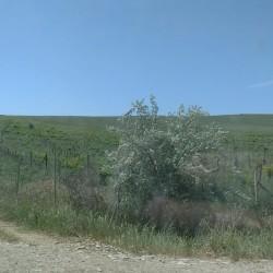 100 hektar ərazi satılır Xüsusi mülkiyyət ərazilərdir Ağsu