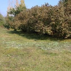 Ərazi satılır Səlyan rayonunda 15 hektar, xüsusi mülkiyyət