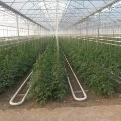 PARNİK SATILIR 10 hektarda sahədə 2300 kv.m 2 istixana