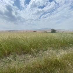 8 hektar torpaq satılır Xızı rayonu ərazisi Giləzidə 5.5