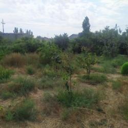 Suraxanı rayonunda 4 sot torpaq sahəsi satılır. Ayrıca