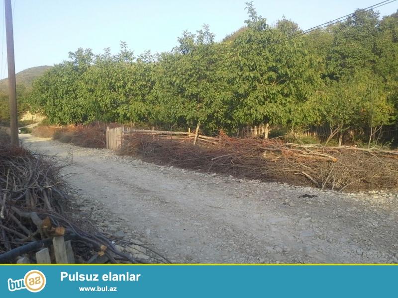 Ismayilli rayonu Diyalli kendi 5 sot torpaqdi wexsidi senedler tam qaydasinda heyetde meyve agaclari var meweye ve caya yaxin yol asfaltdi wehere yaxindi