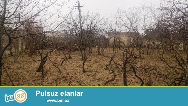 На районе Сабунчу, поселение Бакиханов, продается земельный участок 7 SOT- ,Есть Купча...