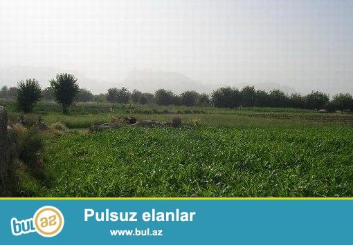 nabranda malibu ulduz palma istirahet zonasinin yaxinliqinda 6 sot torpaq satiram...