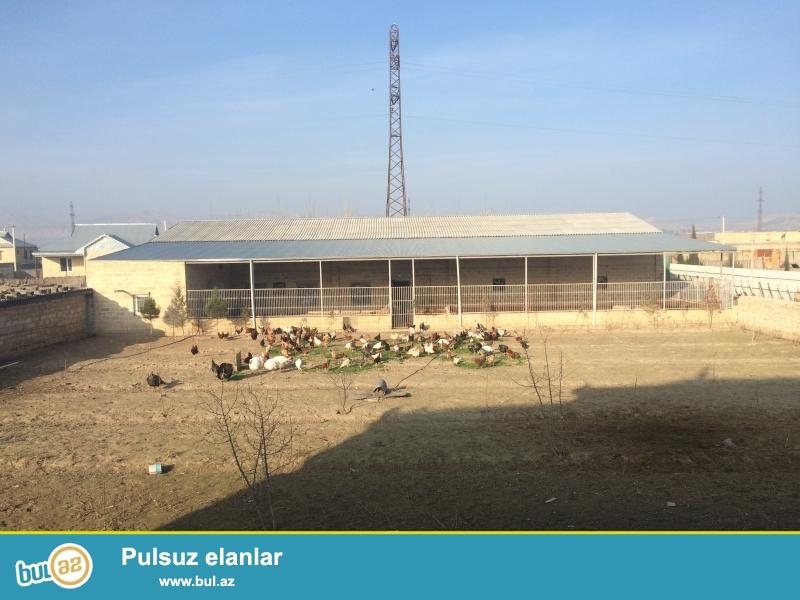 Haciqabul rayonu ckalov mehellesi  M.F.Axundov kucesi tecili ferma satilir...