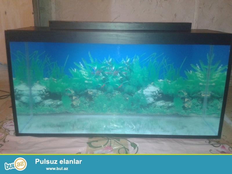 hazir olculerde akvariumlarimiz var  <br /> 10 azn den bashlayan qiymetlerle <br /> 051 878 85 61