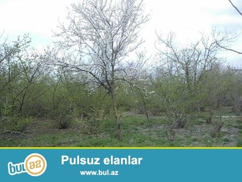 Xacmaz rayonunun Dedeli kendinde Baki Nabran yolundan 3 klm iceri 10 sot torpaq satilir hazir bagdi 250 kl cox findiq yigilir basqa agaclarda var...