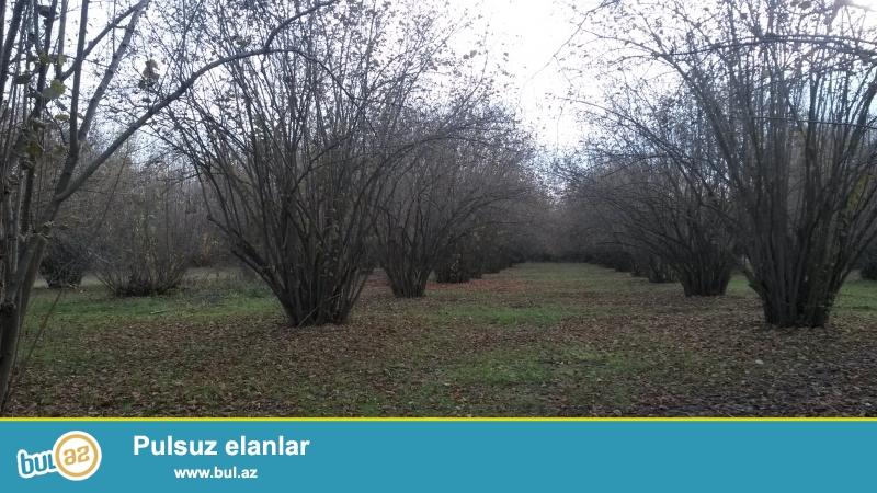 TECİLİ!Qebelenin Aydinqishlaq kendinde 1 hektar 5 sot torpaq sahesi 4 otaqli evle birlikde satilir...