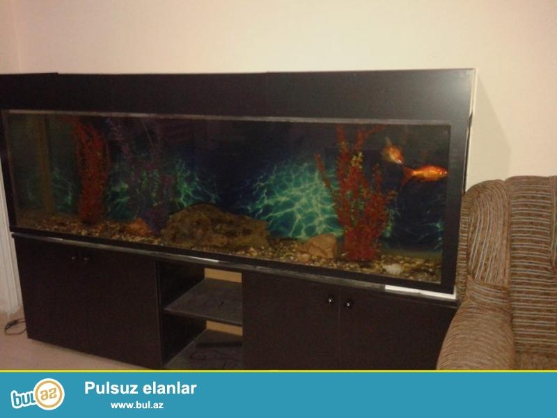 Təcili Akvarium satilir<br /> Uzunluğu-2 metr<br /> Eni- 40 san+15<br /> Hündürlüyü- 60<br /> Şkafla bir yerde hündürlüyü- 1metr 20 san...