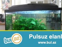 təcili yekə akvarium satılır.