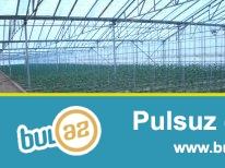 Pirallahi rayonu, Dübendi bağlarında Abu Petrola yaxın ərazidə, hasara alınmış 160 sot torpağın içəisində pomidor parniki tecili satılır...