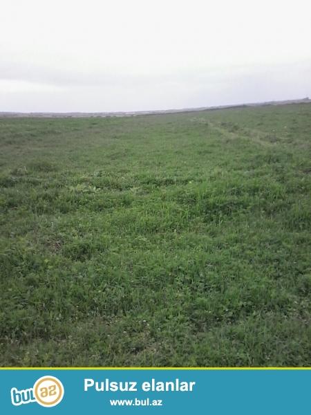 AMİL m Ağcabədi rayonunda rayona yaxın məsafəli kənddə 11 hektar torpaq sahəsində ferma satılır...