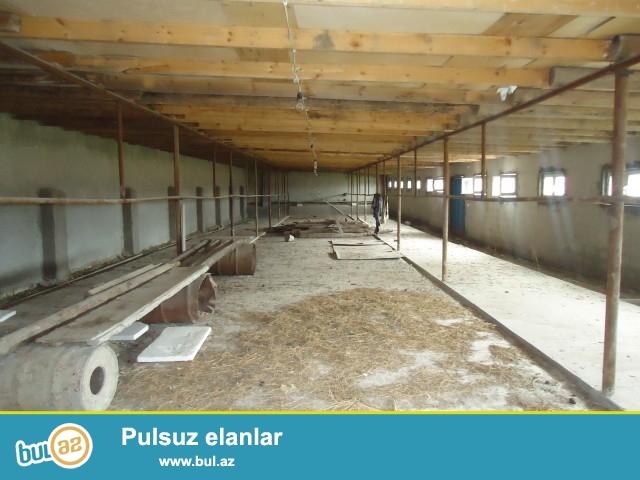 ELŞƏN (Bəhmən m)Beyləqan rayonu Dünyamalılar kəndində 22 hektar torpaq sahəsində daş ferma satılır...