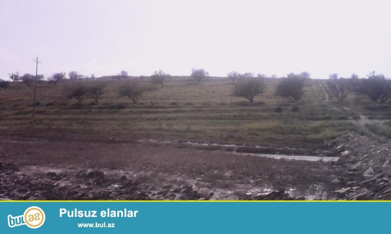 Masazırda,Badam Bağlarında,9 hektar özəl torpaq satılır bir sotu 6min manat Şəhərin istənilən yerində ,şadlıq sarayı,bina və s...