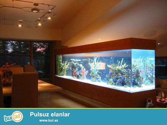 870 litirlik akvarium sınmayan şüşeden ölçüleri nakvariumun uzunluqu 242 eni 60sm hündürlüyü 60sm enini 40sm 50sm veya 55sm etmekde mümkündü ...