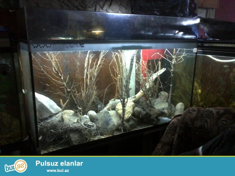 500litirlik Akvarium nerjaveka qapaklı işıqla tezedir ölçüləri uzunluqu 148sm hündürlüyü 80sm qapaqla biryerde 90sm eni 43sm şekilde gördüyünüz akvariumdur ...