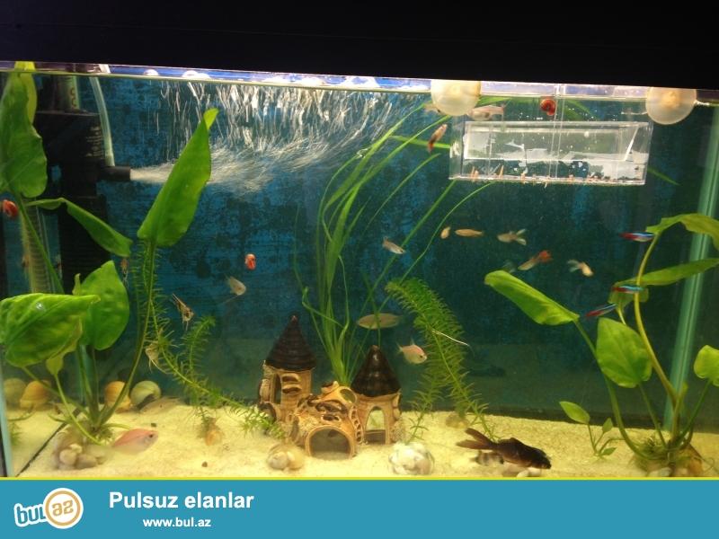 21 baliqnan bir yerde satiram..akvarium 50 litrdi....