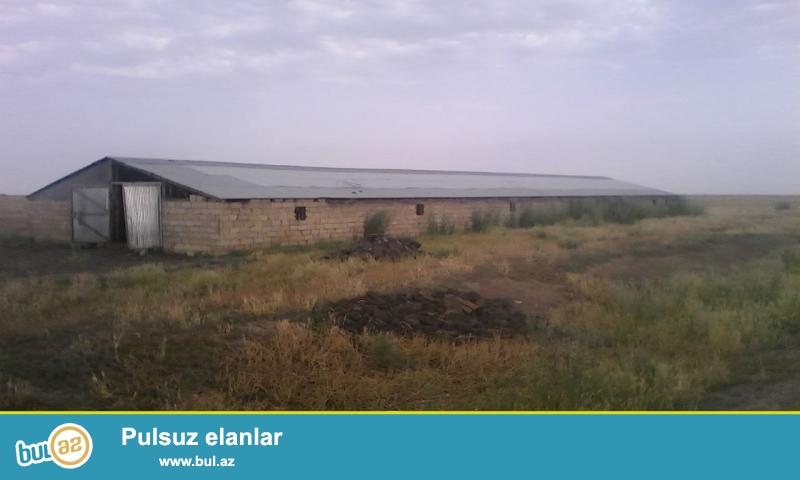 Saatli   rayonunda   300  hektar   torpaqda  480 kv      ferma   satilir...