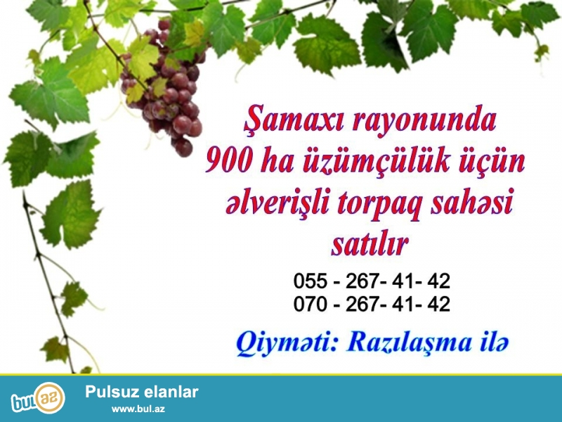 Hər növ üzüm üçün münasibdir. Dəmyə və sualtı yerləri var...