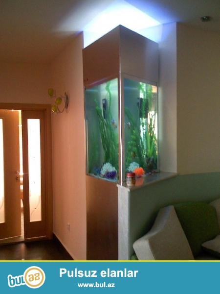 Her nov akvariumlarin ve baliqlarin sifarishi qebul olunur...