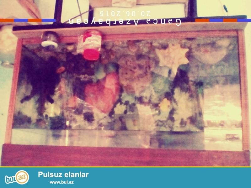 250ltirlik akvarium akvarium bezekleri  7veysi 1mini 1 zibil yeyen baliqlar var  hamsi bir yerde 100 manat...