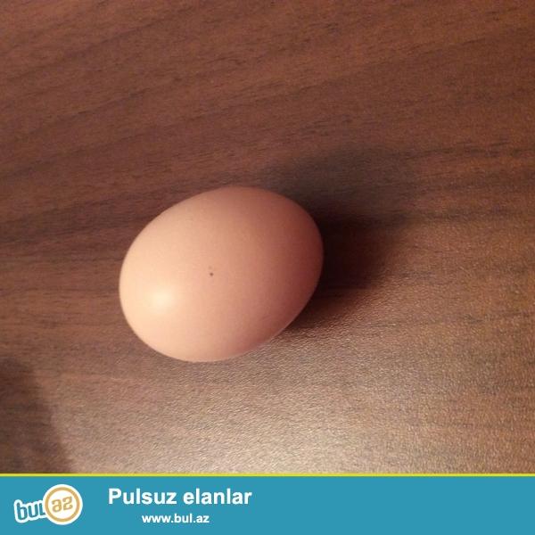 cins brama toyuqlarindan qara saqqali ve ag bramalarin yumurtalari ve cuceleri teklif olunur
