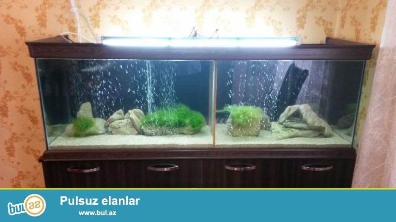 200 litirlik akvariumlar 90azn 400 -500 litirlik akvariumlar 150azn ...