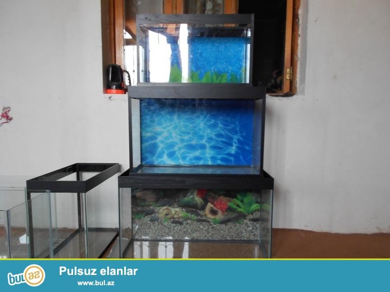 akvariumlar hazir olculerde munasip qiymetlerle <br /> 051 878 85 61 <br /> baliqlarimizda var yerli artim <br /> avadanliqlarda var akvarium ucun