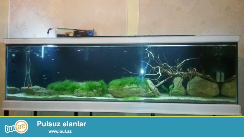 öz şəklidir akvariumun uzunluqu 205sm eni 56sm hündürlüyü 60sm altlıqı var demirdən ...