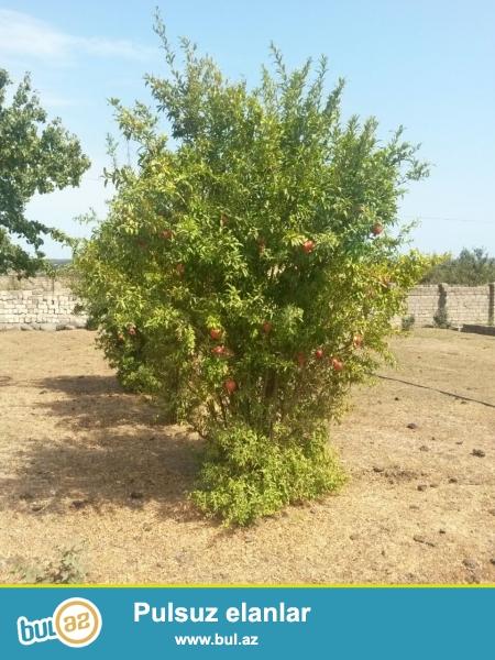 Lənkəran rayonu,Haftoni qesebesi(İstisu)-də 9 sot torpaq sahesi satilir...