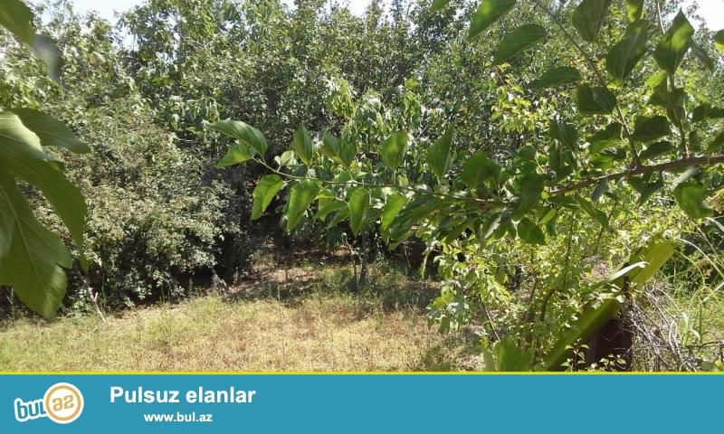 Abseron rayonu Ceyranbatan qesebesinde torpaq sahesi satiram...