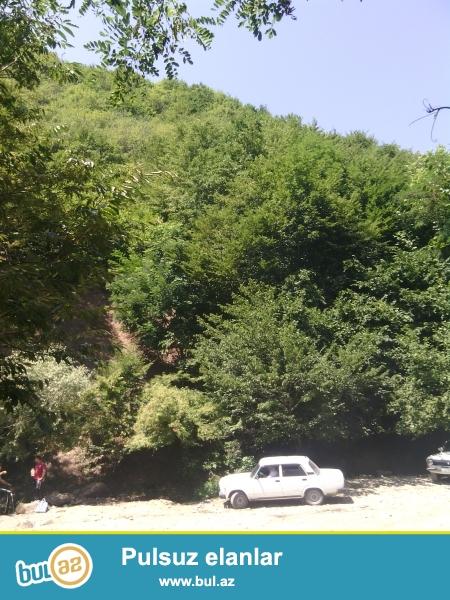 Şeki rayonu baş laysqı kendinde dağ eteyinde sefalı işığı suyu içerisinde yol kenarında 15 sot bağ sahesi satılır...