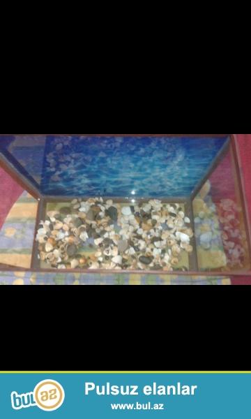 Akvarium satilir. Çox ucuz qiymətə. Iwlenmeyib. hündürlüyü 35 sm...
