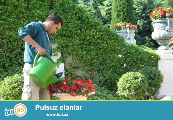 Услуги С А Д О В Н И К А.<br />\r\nB A G B A N xidmatlari<br />\r\nзнаю ландшафтный дизайна<br />\r\nзнаю правила ухода за растениями, цветами, деревьями и декоративными кустарниками<br />\r\nимею знание органики и минеральных удобрений<br />\r\nумею пользоваться газонокосилкой, секатором, триммером<br />\r\nзнаю обустройства дренажа и режимов полива<br />\r\nОбразование высшее,агроном...